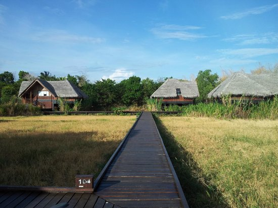 Jetwing Vil Uyana : walk path on the paddy fields