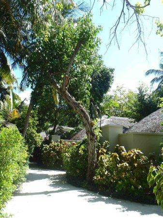 Baros Maldives: Camino interior