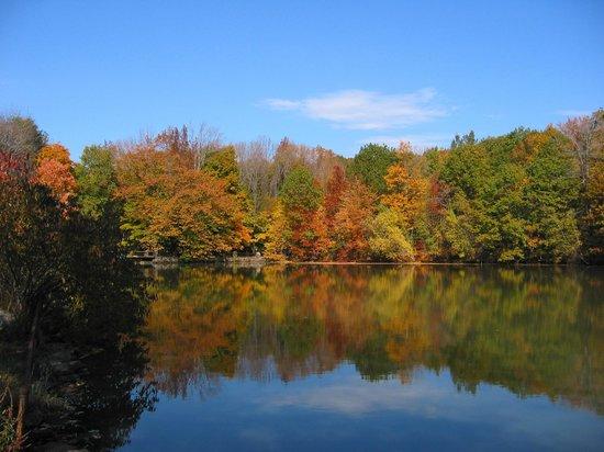 Ananda Ashram- Yoga Society of New York : Foliage!