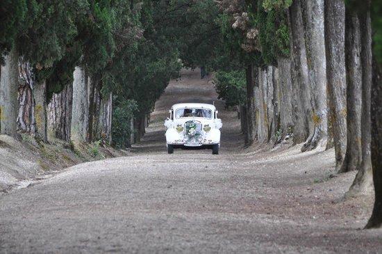 Hotel Villa San Donnino: Viale d'accesso alla chiesetta
