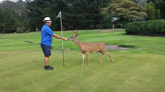 Tu Tu Tun Lodge: Husband playing golf with 'BOB'