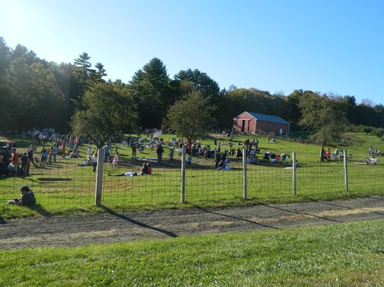 Hyland Orchard & Brewery: Concert Field