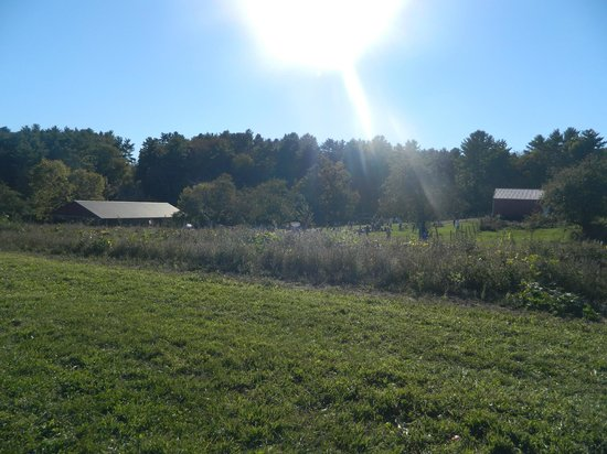 Hyland Orchard & Brewery: Field