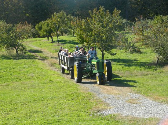 Hyland Orchard & Brewery: Tractor