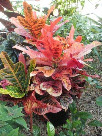 Inverness Botanic Gardens: plant