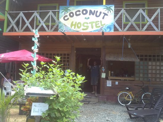Coconut Hostal: Hostal