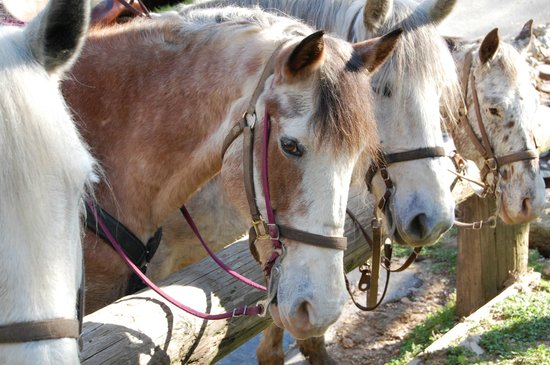 Next to Heaven Adventure: Meet our Horses!