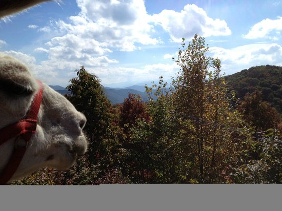 Smoky Mountain Llama Treks - Day Tours : Abu and I enjoying the view on the trail