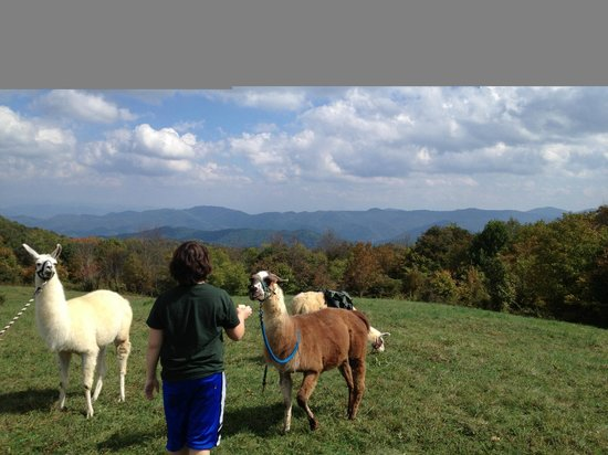 Smoky Mountain Llama Treks - Day Tours : Lunch break on Max Patch