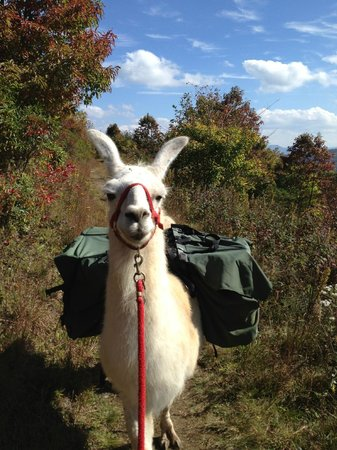 Smoky Mountain Llama Treks - Day Tours : I love Abu!