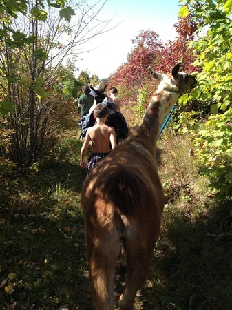 Smoky Mountain Llama Treks - Day Tours : The boys and their llamas