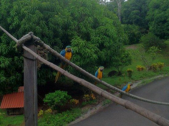 Hacienda del Mar: Amazing wild birds all aroundl