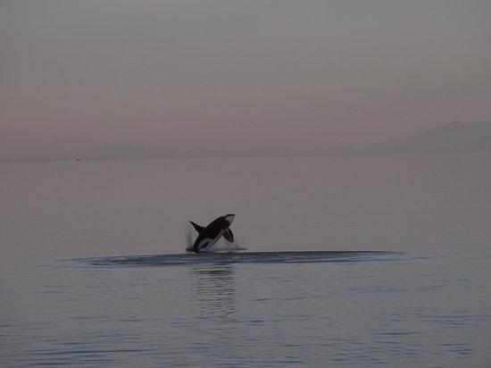 Glacier Bay National Park and Preserve, AK: Orca