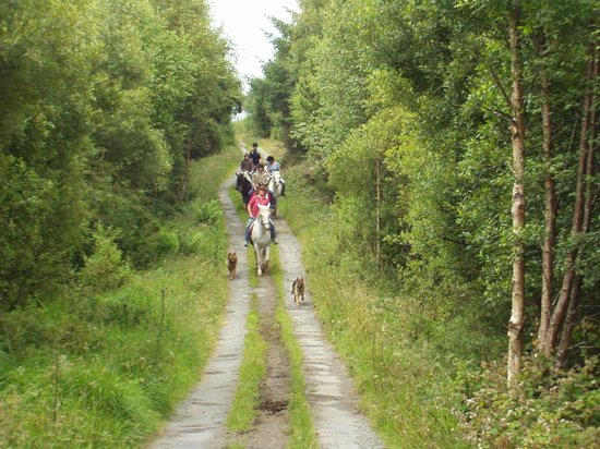 River Valley Stables : taking the dogs for a walk