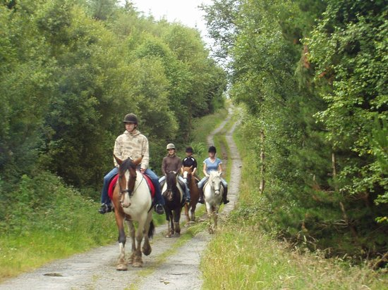 River Valley Stables : trekking through forestry