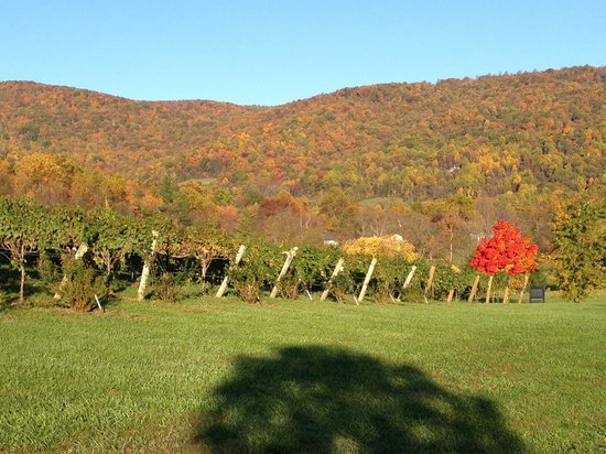 The Farmhouse at Veritas: Vines and Mountains in the fall