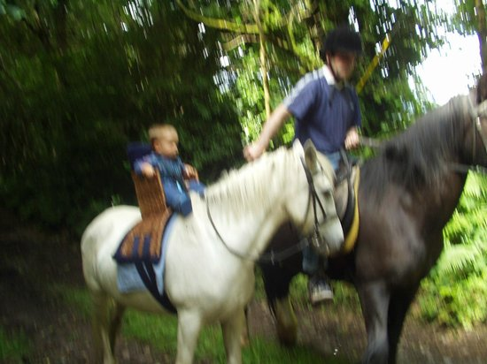 River Valley Stables : we cater for all ages
