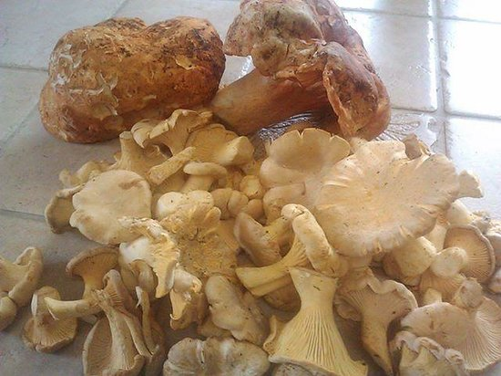 Boreas Bed and Breakfast Inn: Fresh Mushrooms at Boreas
