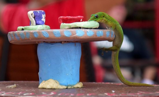 Kope Lani Heavenly Coffee & Ice Cream : Gecko Diner at Kope Lani!