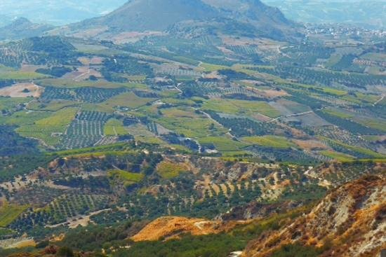 Latania : Lush plataeus of Olive trees and vineyards 1,000 ft up!