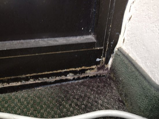 Extended Stay America - San Antonio - Colonnade: Mold on the floor