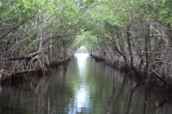 Air Boat USA: Canal through the mangrove forest