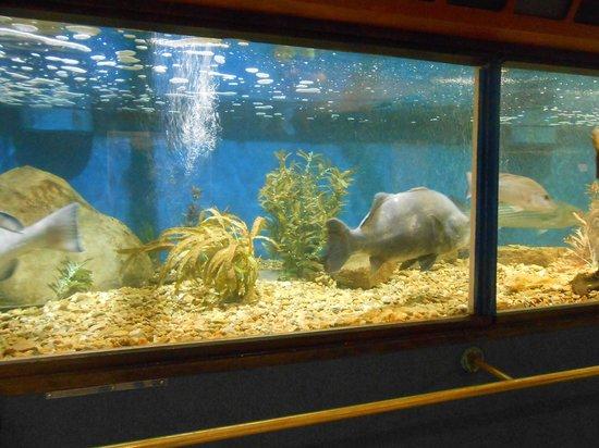 Woods Hole Science Aquarium : Le Vasche