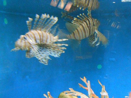 Woods Hole Science Aquarium : Attrazione