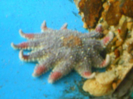 Woods Hole Science Aquarium: Attrazione