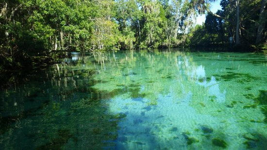 Crystal River, FL: Three Sisters Springs