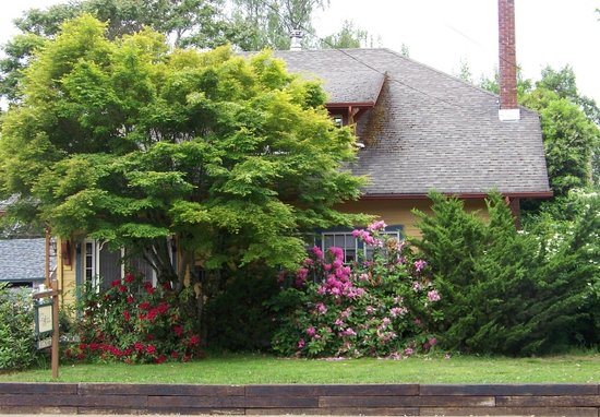 Gray Cat Inn: Blooming Rhododendrons