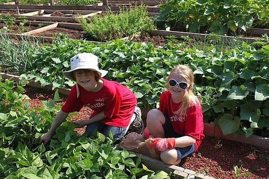 Anne Springs Close Greenway: Two young volunteers in our Plant-A-Row for the Hungry Garden