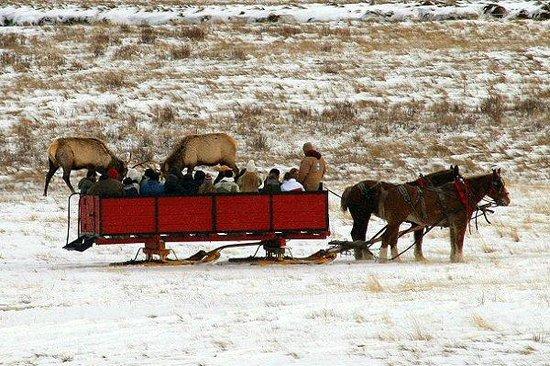 National Elk Refuge: Sleigh Ride