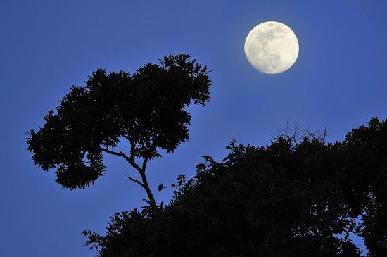 Refugio Amazonas : Night walk in the rainforest (copyright by Thomas Marent)
