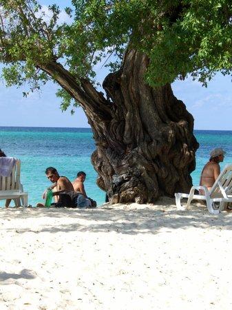 Guardalavaca Beach: pianta tipica