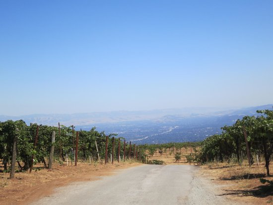 Ridge Vineyards : View on the valley below