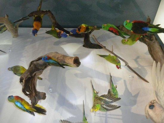 Musée et galerie d'art du Territoire du Nord : Museo e Galleria d'Arte del Territorio del Nord