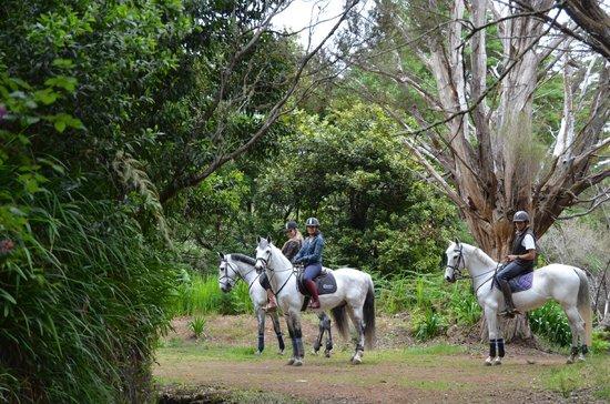 Катание на лошадях на Quinta do Riacho