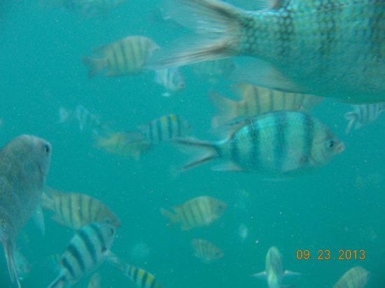koh taen, plenty fishes swim by during snorkeling