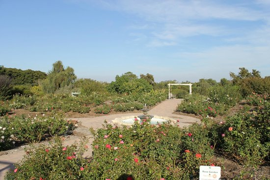 South Coast Botanic Garden: Rose Garden