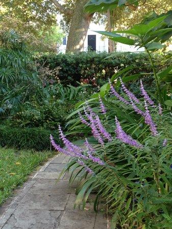 Merhaven Bed No Breakfast : Garden Walkway