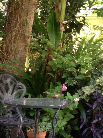 Merhaven Bed No Breakfast : Garden Picture 2