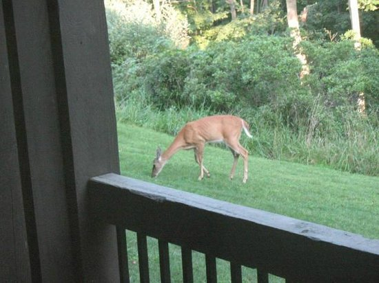 Salt Fork Lodge and Conference Center: Looking out our deck in morning