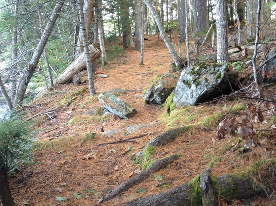 Oven's Mouth Preserve: Beautiful pine-needle covered paths (with exposed roots)