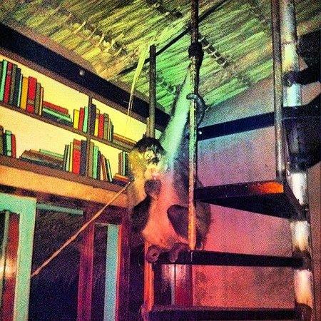 Casa De Olas: Resident hostel monkey