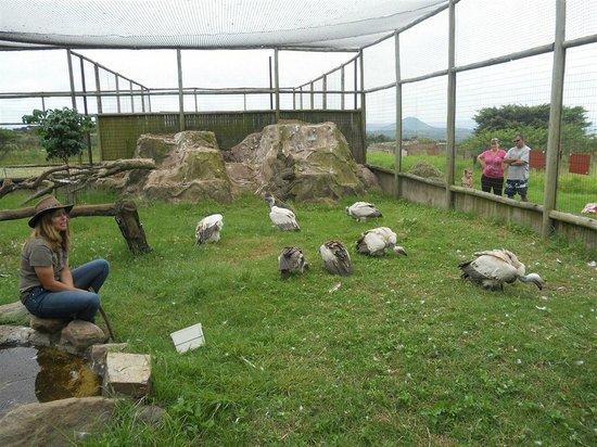 African Bird of Prey Sanctuary: The vulture enclosure