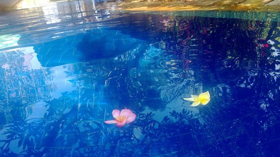 Pool Villa Club Senggigi Beach Lombok : frangipani flowers in pool