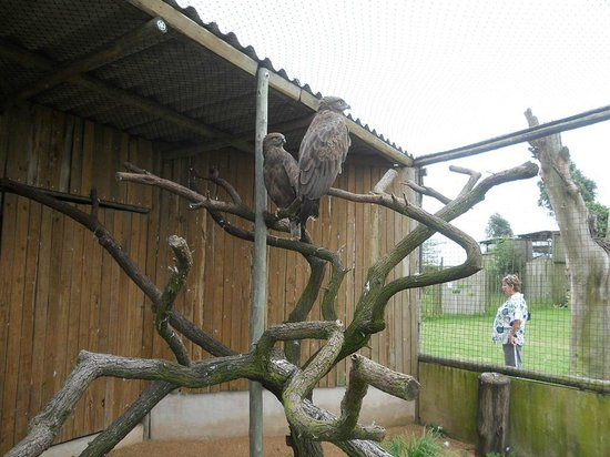 African Bird of Prey Sanctuary: Very clean and well manitained