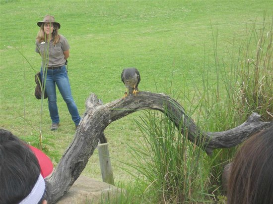 African Bird of Prey Sanctuary: You learn about various raptors and their habits