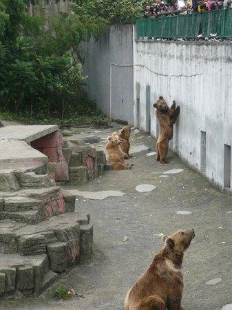 Ningbo Zoo: bears a beggin'
